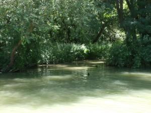 По реката. Края на юли 2012 г.